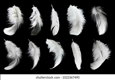 Set of white feathers isolated on black background