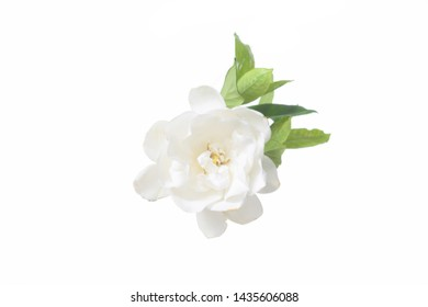Set of white gardenia with leaves