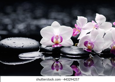 Set of white orchid with therapy stones