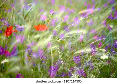 set of wild and colorful flowers in green grasses