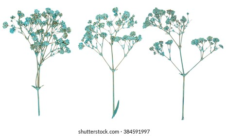 Set of wild dry blue pressed flowers isolated