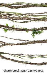 set wild dry liana jungle vine isolated on white background, clipping path