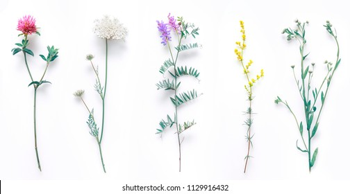 Set of wild flowers, flowering grass, natural field plants, color floral elements, beautiful decorative floral composition isolated on white background, macro, flat lay, top view.