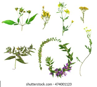 Set of wild flowers and plants isolated on white background. Herbarium