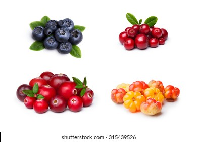 Set of wild northern berries: bilberry,cloudberry, lingonberry,cranberry. Studio shoot,large depth of field, retouched.