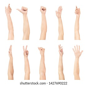 Set of womens hand on a white background