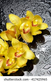 Set of yellow branch orchid -wet background