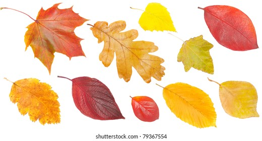 set of yellow and red leaves, isolated on white background