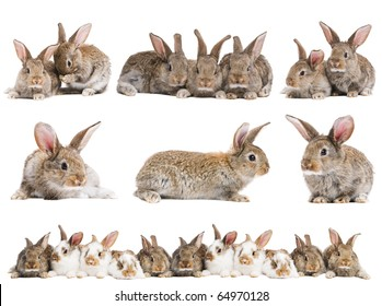 set of young baby light brown rabbits with long ears isolated on white