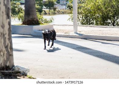 Sete Lagoas/Minas Gerais/Brazil - JUL 10 2015: Dog walking in the center of Sete Lagoas