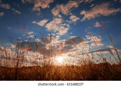 Setting Sun Behind Grass