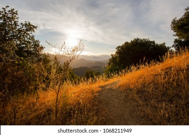 Setting sun hits dry grass in the Marin Headlands
