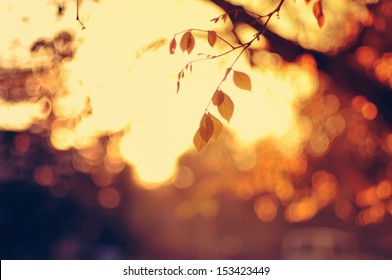 Setting sun as seen through fall foliage and bokehed background