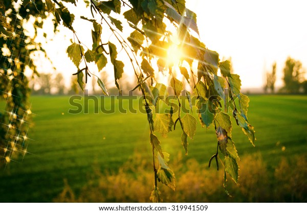 setting sun shines through the leaves. the sun's rays pass through the orange leaves of autumn trees
