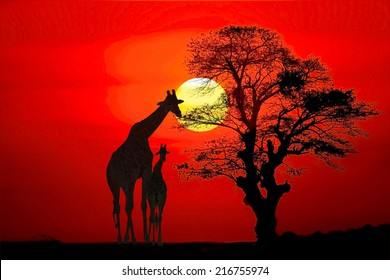 Setting sun with silhouettes of Giraffes and trees on Safari