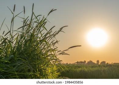 A setting sun in Waddinxveen