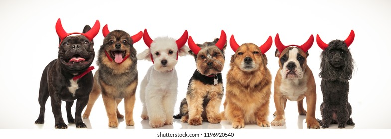 seven cute dogs wearing devil horns standing together in a row, collage image