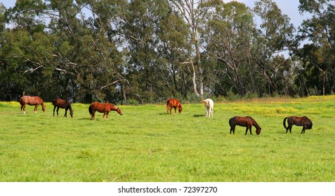 Seven different colored horses grazing in a green pasture