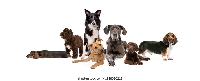 seven different dog breeds posing in front of a white background
