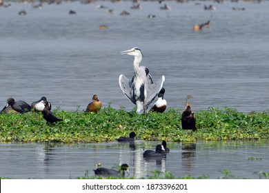 Seven Different Species Of Birds In One Frame