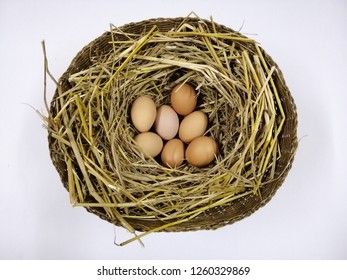 Seven eggs placed in the nest. White background