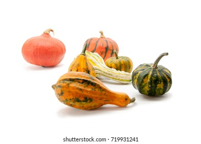 Seven pumpkins on a white background