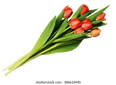 Seven red tulip flowers bouquet isolated on white