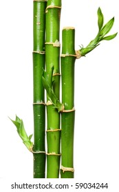 several bamboo grove  on the white background