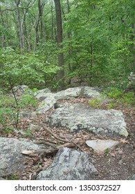 several boulders along a path in the woods with broken limb laying on the ground