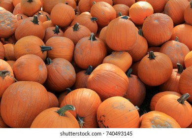 Several bright orange pumpkins in various shapes and sizes, arranged on a long table in open market.