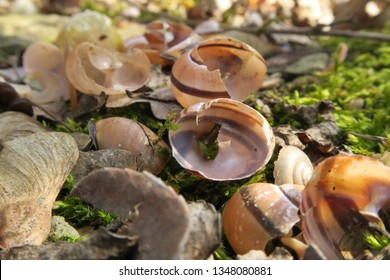 several broken snail shell on top a bis stone