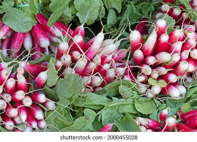 several bunches of radishes on a market