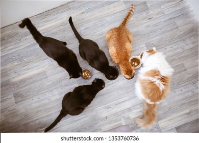 Several cats eat from bowls, top view. Caring for animals, a lot of pets. Black, red and white cats in a real interior.