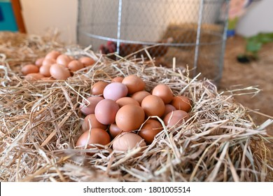 Several chicken eggs It is a product of organic chicken farming. Get protein every day