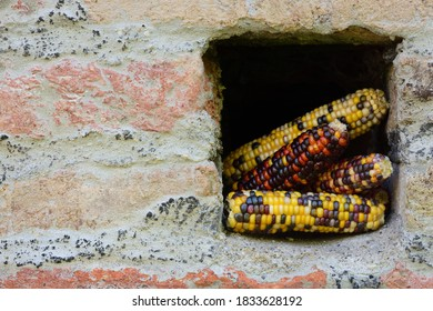Several cobs of ornamental corn stand in a wall opening in an old brick wall with space for text