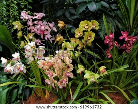 Several colourful orchids at the National Orchid Garden, Singapore