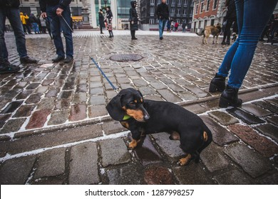 Several dogs have come to the protest against animal cruelty in Riga, Latvia