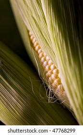 Several ears of corn