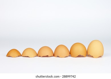several eggs shells stand in size order