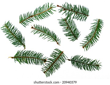 Several fir-trees branches isolated on white background