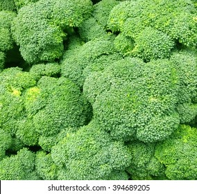 Several fresh Broccoli heads. Broccoli is high in Vitamin C and Vitamin K.