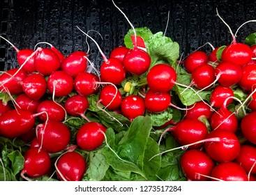 Several fresh radishes make a Radish background