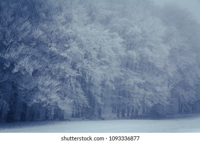 Several frost covered trees on a misty winter day