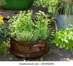 Several herbs like Basil and other in a old decorative pot, for use in kitchen as spice or tea.