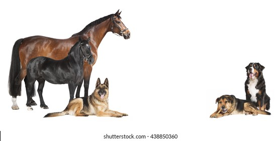 several horses and dogs against a white background, isolated