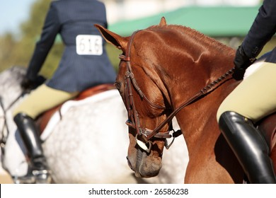 Several horses and riders before the start of a morning horse show (shallow focus point on foreground horse's head).