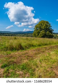 Several hundred years old linden near the Beniowa  village in the Bieszczady County, Subcarpathian Voivodeship, in south-eastern Poland, close to the border with Ukraine.