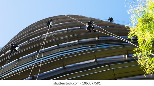 Several industrial alpinists cleaning windows of glass skyscraper