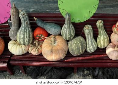 several kinds of pumpkins