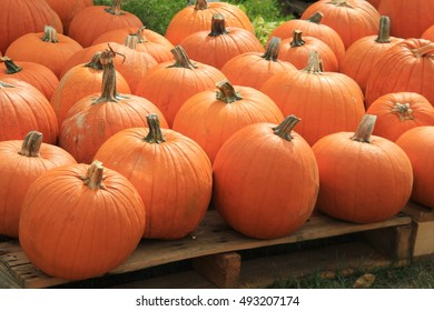 Several large, colorful pumpkins arranged on wood pallets at local farmers market.